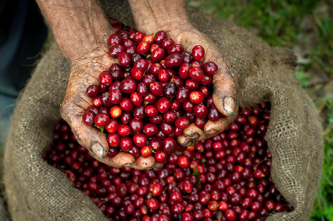 Spanish Immersion Colombia Coffee Beans